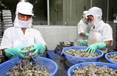 虾类——越南农业的主要出口产品