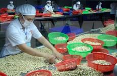 越南粗腰果质量标准出炉   强化进口粗腰果质量监管