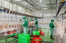 西宁省年产量500万只的家禽屠宰厂投入运行