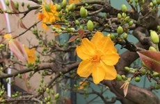 平定省梅花之都积极备战春节鲜花绿植受青睐