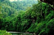 总面积近27万公顷的越南森林荣获国际认证证书
