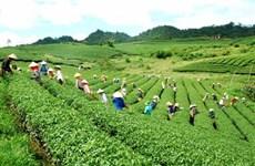 北江省致力于提高文村茶叶品牌的知名度