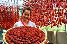 靠日本技术振兴林同省大叻吊柿饼产业
