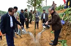 陈国旺同志出席宣光省植树节启动仪式