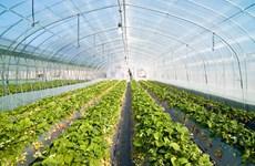 林同省实现农产品市场多样化发展