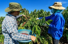 越南咖啡享誉世界