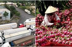 越南农产品对中国进行边贸出口受阻   工贸部建议采用正贸对中国进行出口
