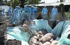 越南与美国合作研究非洲猪瘟病毒疫苗