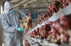 越南4个省市出现禽流感