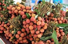 越南为新鲜荔枝产品进入日本市场作出充分准备
