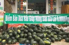 韩国携手助力解决越南农产品滞销问题