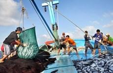 永良渔港的早晨——越南南中部地区批发之渔港