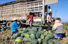 加强农产品生产管理  制定应对疫情有效方案