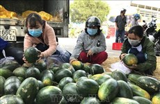 新冠肺炎疫情对越南农产品的影响和对策  努力把挑战变成机遇