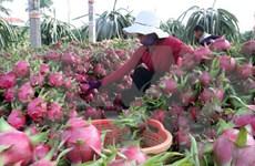 2020年1月越南蔬果出口额猛降20.6%