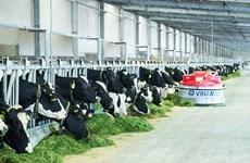越南一家乳制品生产厂获得对华出口资格