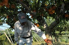新加坡解除对日本福岛县产食品的进口禁令