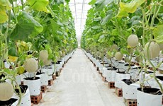 促进越美两国在农产品生产方面的贸易和科技合作