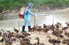 越南10个省市出现禽流感