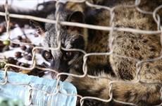 世界自然基金会亚太地区呼吁终止贩卖和销售野生动物