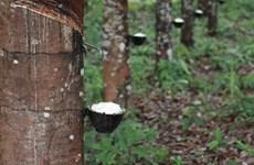 老挝橡胶出口呈现增长趋势