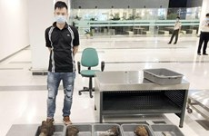 飞往新山一国际机场客机因新冠肺炎疫情转移到芹苴机场  海关查获30公斤犀牛角