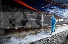 全国11个省市出现禽流感疫情
