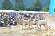 安江省力争让七山赛牛节成为国际性赛事