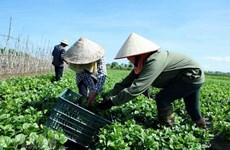 越南合作社白皮书即将对外发布