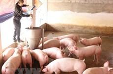 《欧盟-越南自由贸易协定》:越南畜牧业走向何方 ?