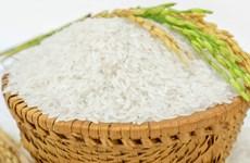 越南对非洲市场出口大米的良机