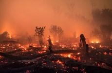 印尼进行人工降雨以扑灭森林火灾