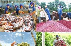 EVFTA: 为越南农产品拓宽市场