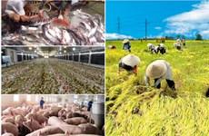 越南农业产业迎来价值链重组的机会