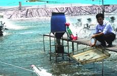 金瓯省力争实现虾产量增长8%的目标