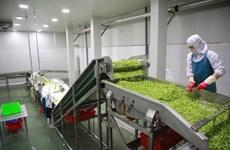 越南企业致力对俄罗斯出口蔬菜罐头树立越南品牌形象