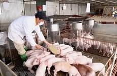 越南政府副总理郑廷勇:促进生猪数量增加 确保市场供求平衡
