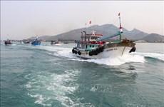 宁顺省加大打击非法不报告和不管制捕捞力度  助力取消欧盟委员会对越南水产品的黄牌警告