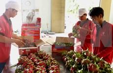 越南红心火龙果展销周活动在澳大利亚圆满举行