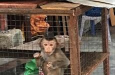 自然教育中心通过热线平台救助多种濒临灭绝的野生动物