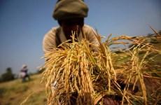 新冠肺炎疫情:泰国考虑向受疫情影响的农民发放现金补助