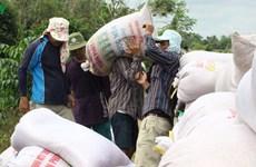 九龙江平原保障国家粮食安全