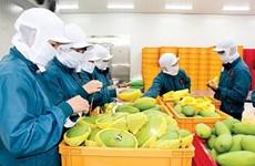 2020年第一季度越南蔬果出口额达到8.36亿美元
