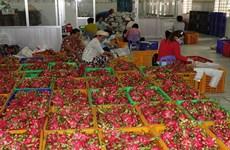 前江省实现水果产销对接