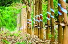 马来西亚天然橡胶产量下降 出口量有所增长