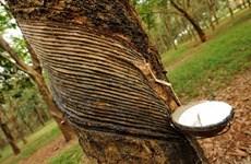 2020年第一季度柬埔寨橡胶出口额达逾7500万美元