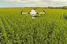 农业在疫情形势中扮演支柱角色
