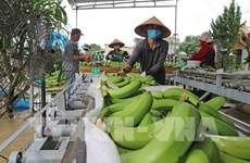 胡志明市促进新型合作社模式发展