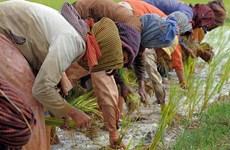 柬埔寨增加农业财政支持