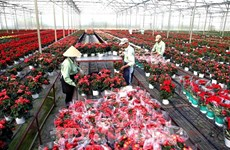 新冠肺炎疫情:林同省为花卉业疏解困难